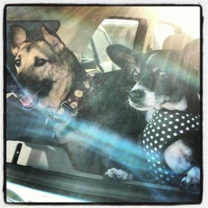 Riding in Cars with Dogs